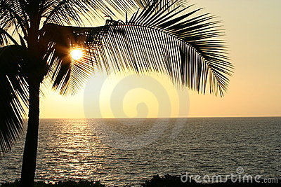 Palm Leaves at Sunset Horizontal