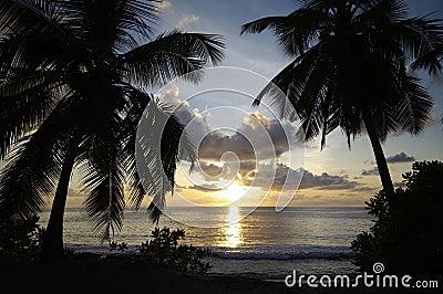 Palm lined beach Anse Takamaka at sundown, Seychelles