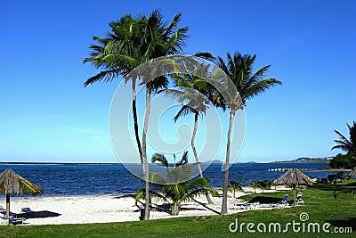 Palm Lined Island Beach