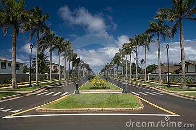 Palm-lined street