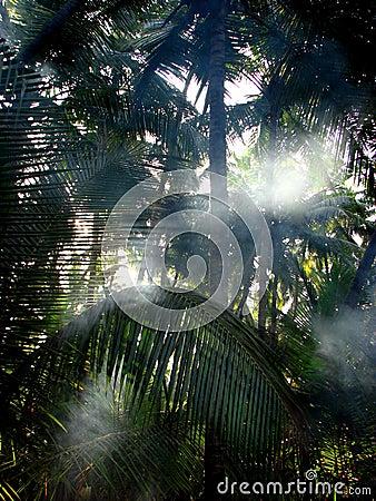 Palm Mist