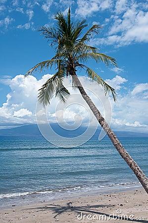 Palm near the ocean coast