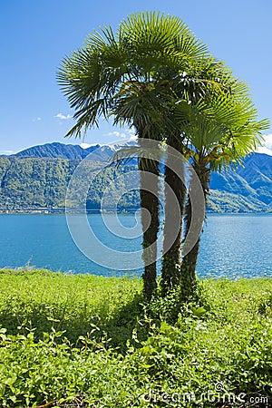 Palm near water