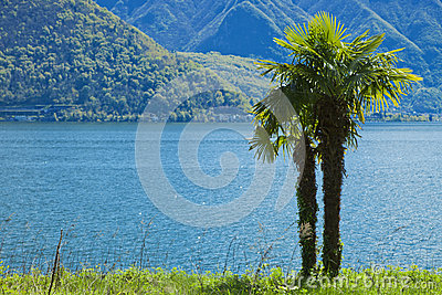 Palm near water, switzerland