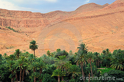 Palm oasis in Morocco