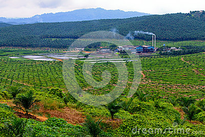 Palm Oil Mill / Factory
