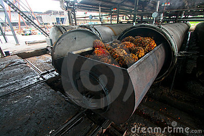 Palm Oil Processing
