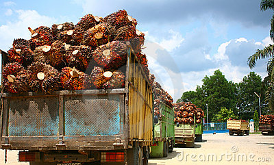 Palm Oil Supply