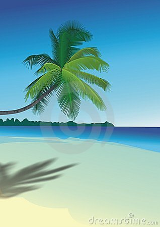 Free Palm On The Beach Royalty Free Stock Image - 2378146