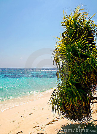 Palm op het strand