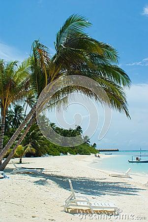 Palm op het strand door het water