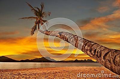Palm Over Sunset Sea