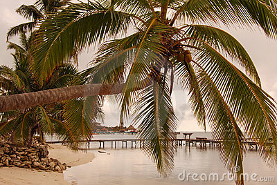 Palm over water at sunrise in Belize