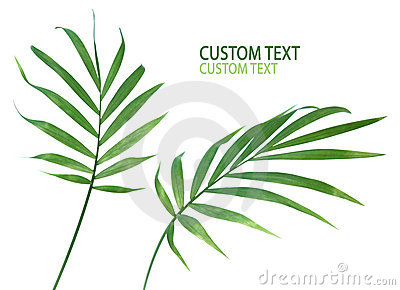 Palm Plant Leaves