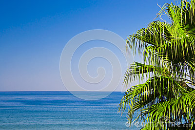 Palm with sea view
