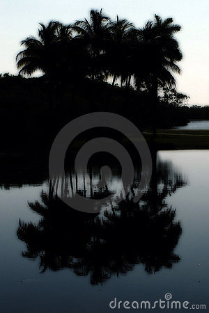 Palm silhouette and reflection