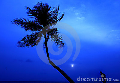 Palm silhouette and runner