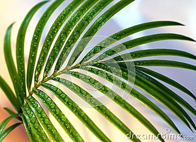 Palm sprig