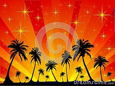 Palm Stars