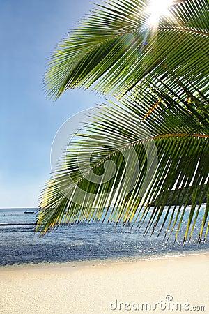 Palm sun sea