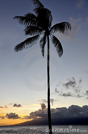 Palm at sunset