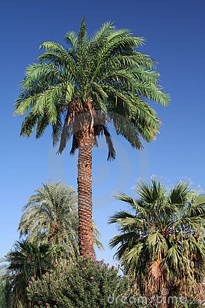 Free Palm Tree Stock Images - 1208214