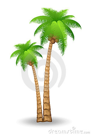Free Palm Tree Stock Images - 14089514