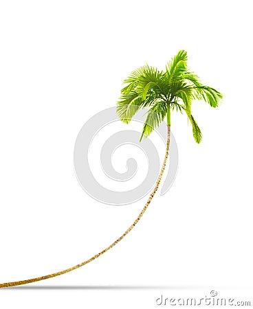 Free Palm Tree Royalty Free Stock Photography - 14112837