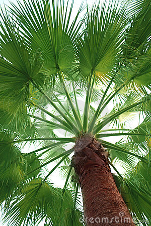 Free Palm Tree Stock Photo - 22265840