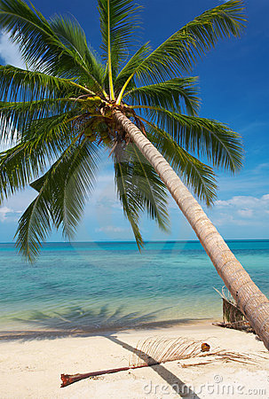 Palm Tree Stock Photos - Image: 2298953