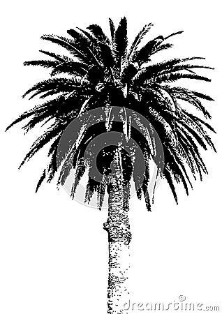 Free Palm Tree Royalty Free Stock Photo - 2469335