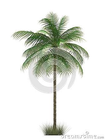 Free Palm Tree Stock Image - 2852861