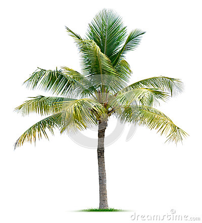 Free Palm Tree Royalty Free Stock Photo - 31395745