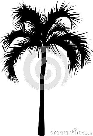 Free Palm Tree Stock Image - 336631