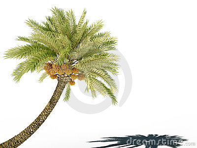 Palm tree 3d cg