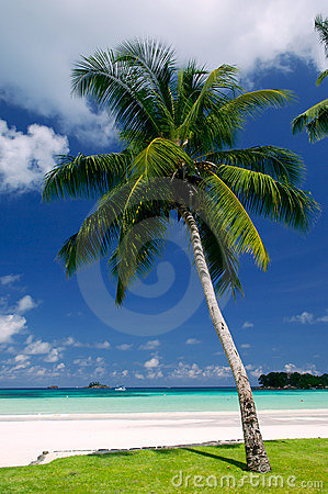 Free Palm Tree Royalty Free Stock Images - 4181339