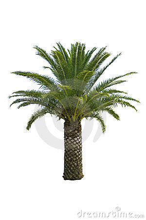 Free Palm Tree Royalty Free Stock Images - 5228779