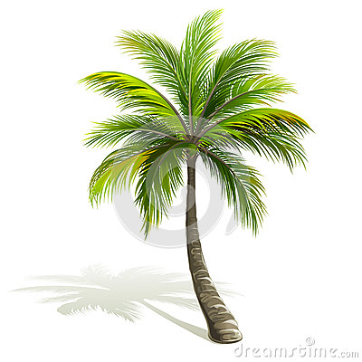 Free Palm Tree Stock Image - 53464771