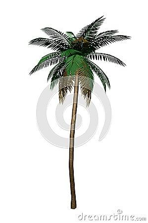 Free Palm Tree Royalty Free Stock Image - 6000156
