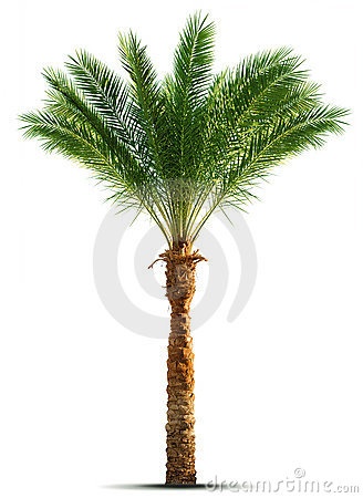 Free Palm Tree Stock Images - 7473484