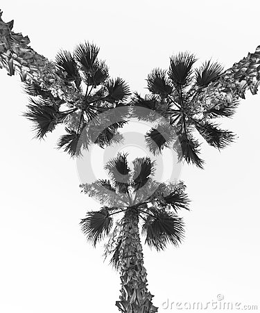 Free Palm Tree Stock Images - 78804904