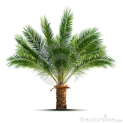 Free Palm Tree Royalty Free Stock Photo - 7949275