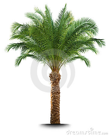 Free Palm Tree Stock Photo - 9946300