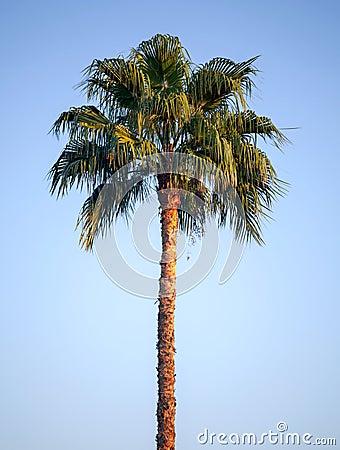Palm tree above blue sky