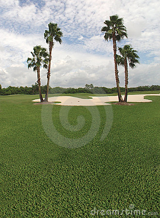 Free Palm Tree And Golf Course Stock Image - 717631