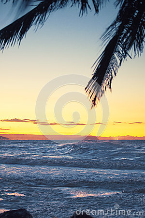 Free Palm Tree At Dusk Stock Photo - 53690330