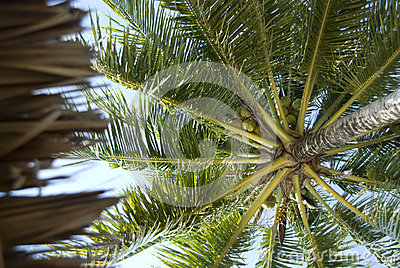 Palm tree background from below