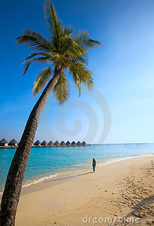 Palm tree on background of ocean and silhouette of