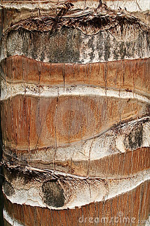 Free Palm Tree Bark - Close Up Stock Photo - 18547290