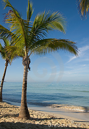 PALM TREE ON THE BEACH Palm tree on